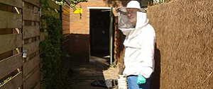 wespen, bijen en muggen bestrijden