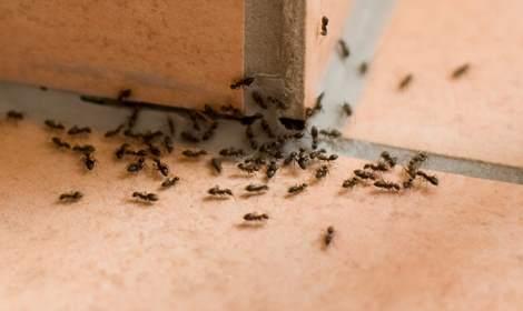mieren verdelgen Groningen